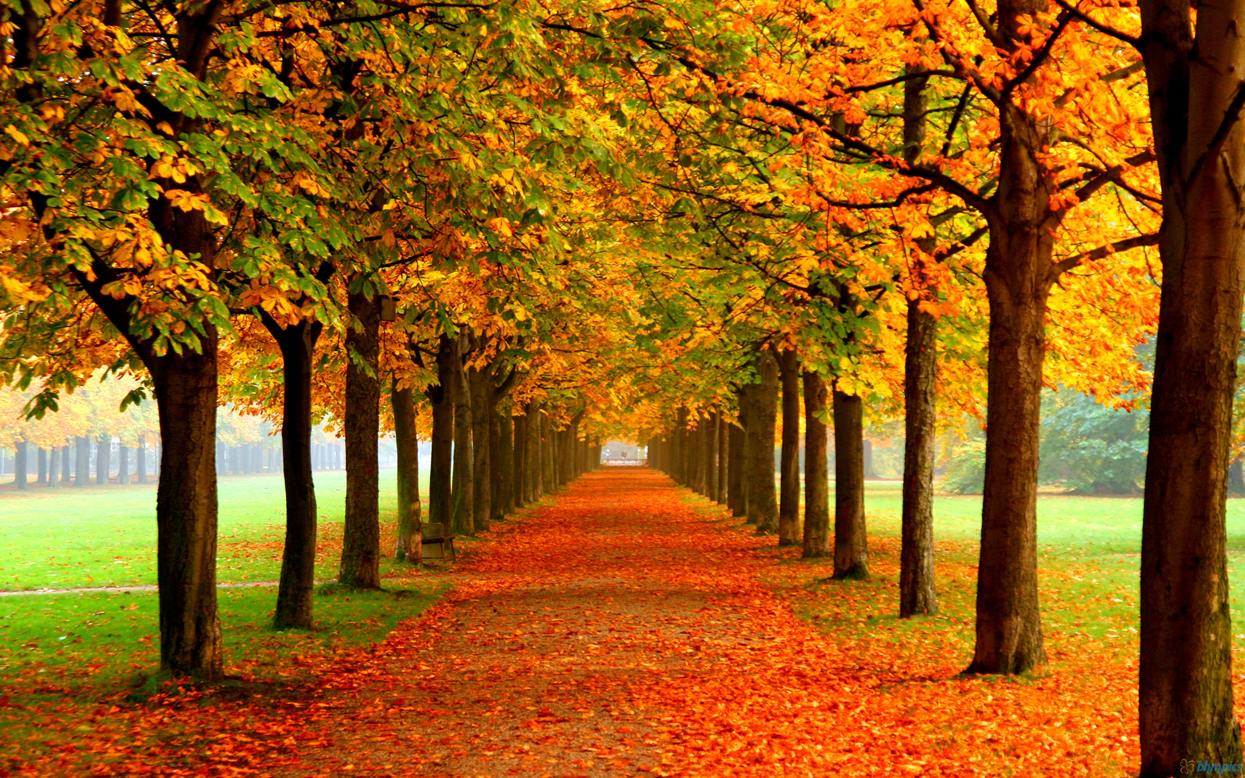 Image Copyright http://www.speechbuilders.org/autumn-leaves/